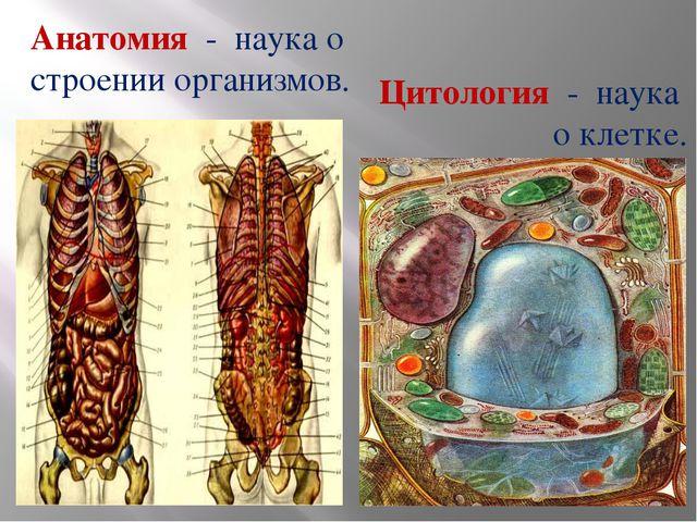 Анатомия - наука о строении организмов. Цитология - наука о клетке.