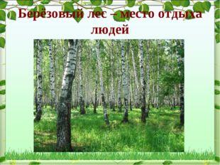 Берёзовый лес – место отдыха людей