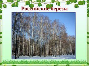 Российские берёзы