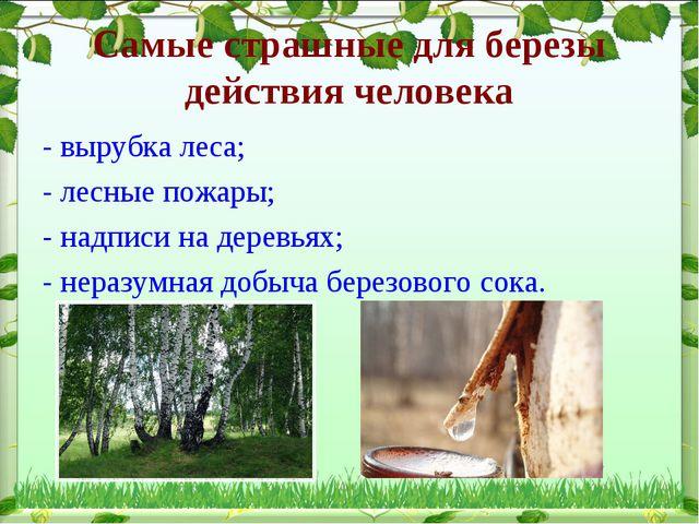 Самые страшные для березы действия человека - вырубка леса; - лесные пожары;...