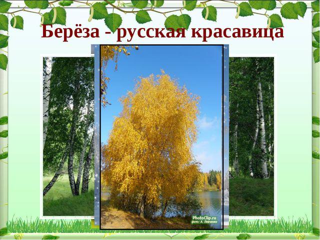 Берёза - русская красавица