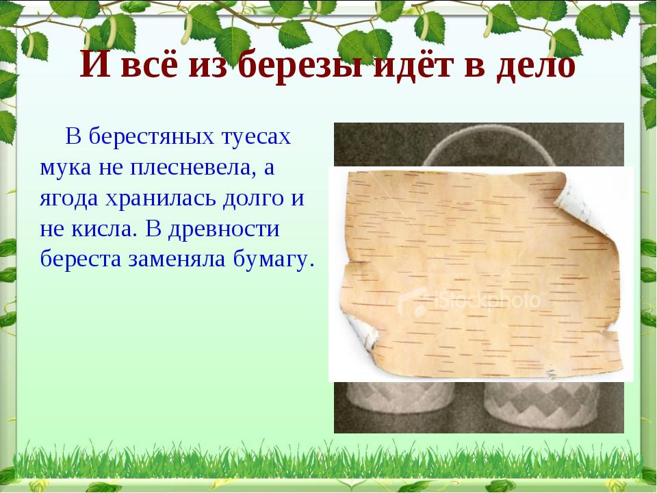 И всё из березы идёт в дело В берестяных туесах мука не плесневела, а ягода х...