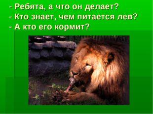 - Ребята, а что он делает? - Кто знает, чем питается лев? - А кто его кормит?