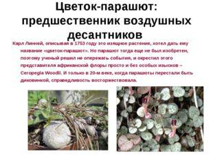 Цветок-парашют: предшественник воздушных десантников Карл Линней, описывая в