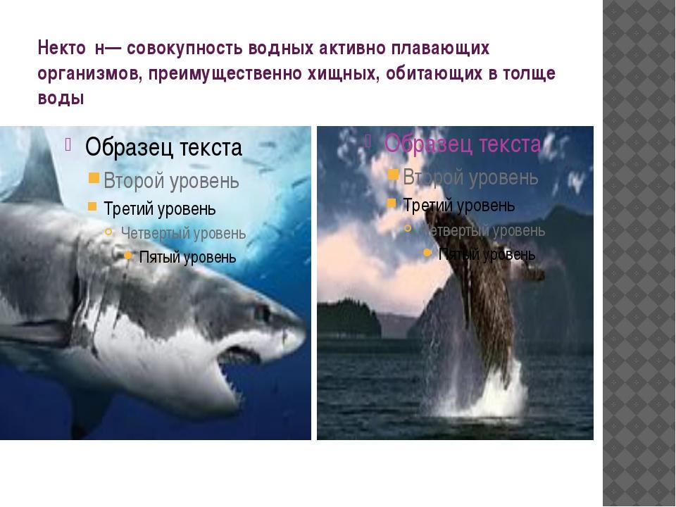 Некто́н— совокупность водных активно плавающих организмов, преимущественно хи...
