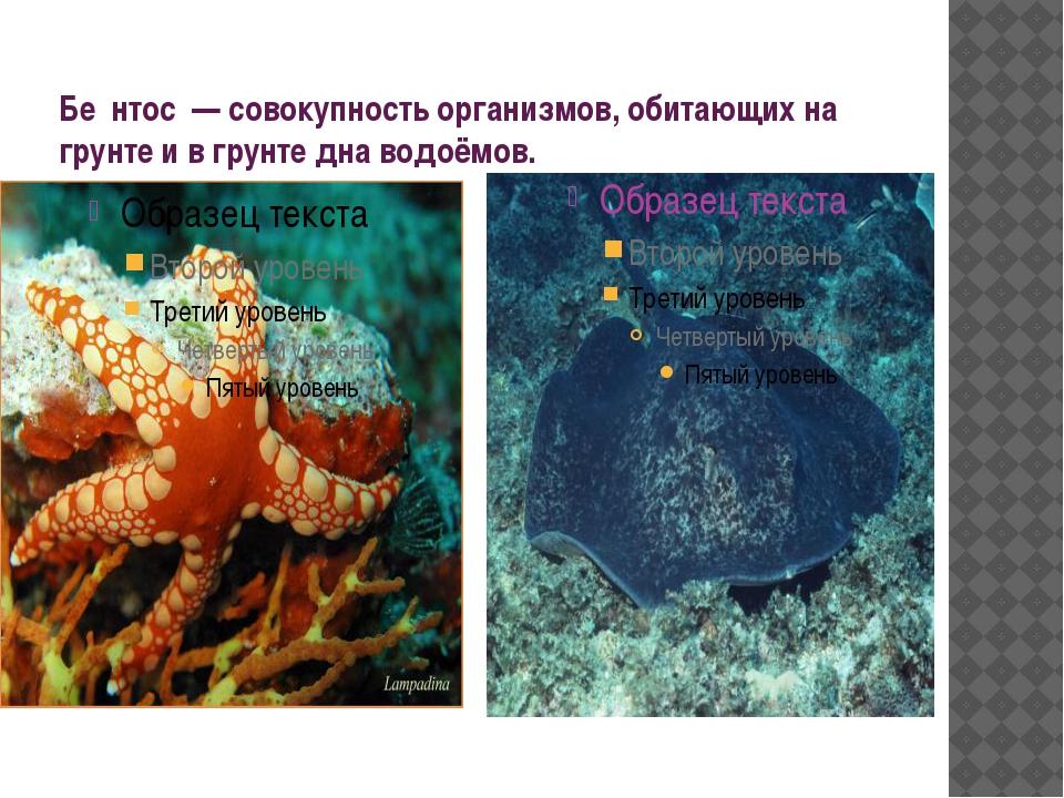 Бе́нтос — совокупность организмов, обитающих на грунте и в грунте дна водоёмов.