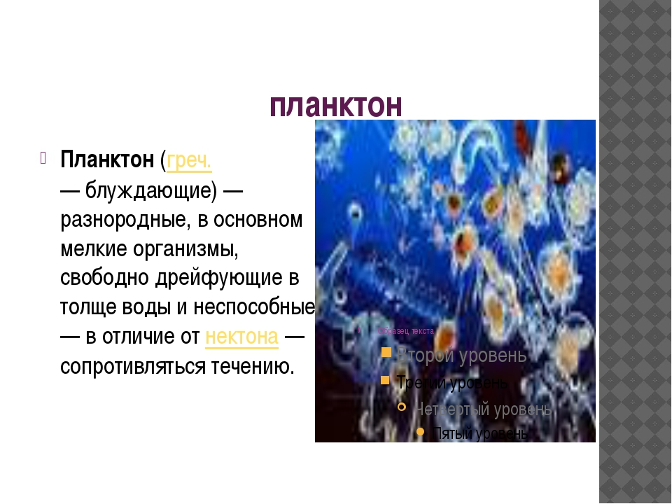 планктон Планктон (греч. πλανκτον — блуждающие) — разнородные, в основном мел...