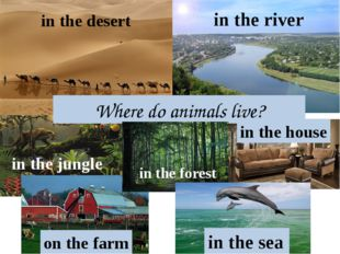 Where do animals live? in the sea in the jungle in the desert in the river in