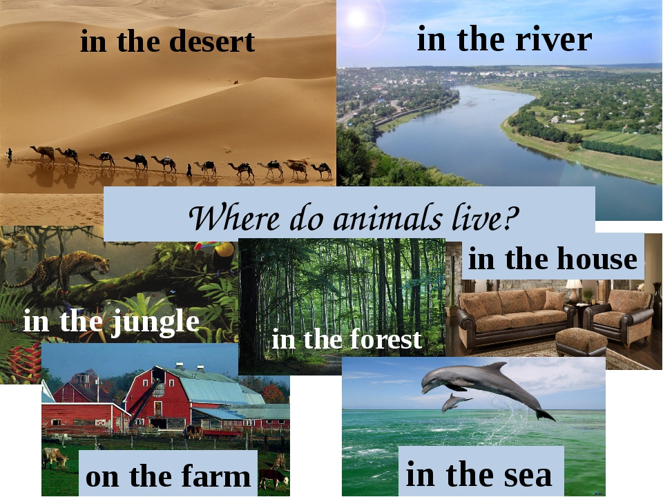 Where do animals live? in the sea in the jungle in the desert in the river in...