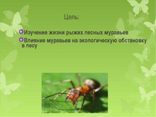 Изучение жизни рыжих лесных муравьев    Изучение жизни рыжих лесных муравьев