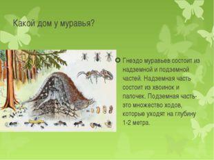 Гнездо муравьев состоит из надземной и подземной частей. Надземная часть сост