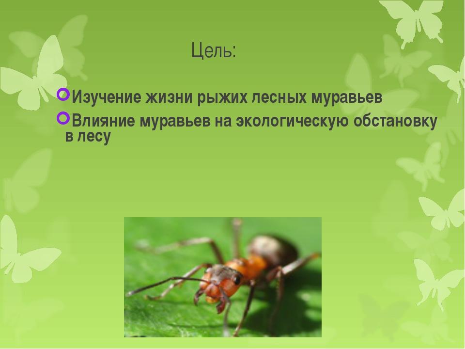 Изучение жизни рыжих лесных муравьев    Изучение жизни рыжих лесных муравьев...
