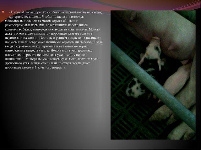 Основной корм поросят, особенно в первый месяц их жизни,— материнское молоко...