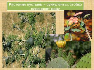 Растения пустынь – суккуленты, стойко переносят жару