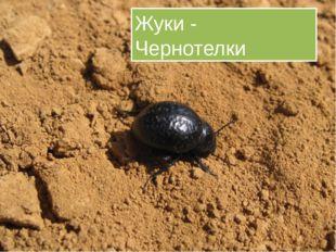 Жуки - Чернотелки