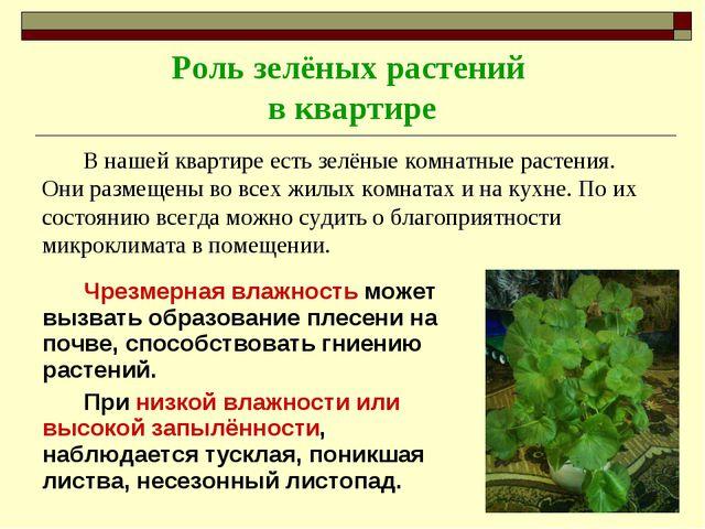 Роль зелёных растений в квартире В нашей квартире есть зелёные комнатные раст...