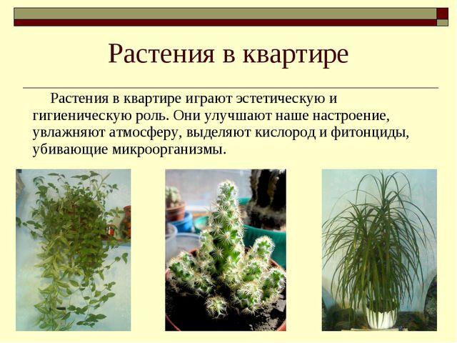 Растения в квартире Растения в квартире играют эстетическую и гигиеническую...