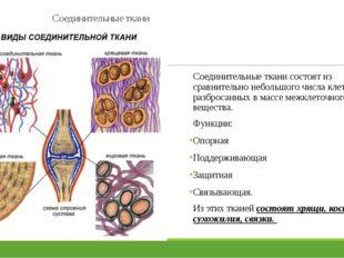 Соединительные ткани Соединительные ткани состоят из сравнительно небольшого