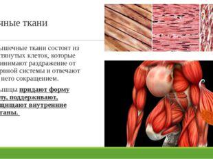 Мышечные ткани Мышечные ткани состоят из вытянутых клеток, которые принимают