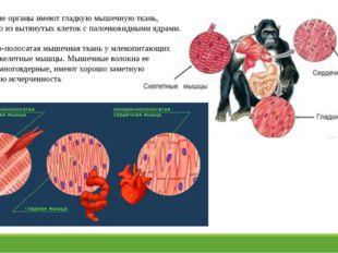 Внутренние органы имеют гладкую мышечную ткань, состоящую из вытянутых клеток