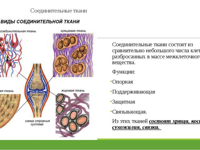 Соединительные ткани Соединительные ткани состоят из сравнительно небольшого...