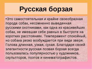 Русская борзая Это самостоятельная и крайне своеобразная порода собак, несомн