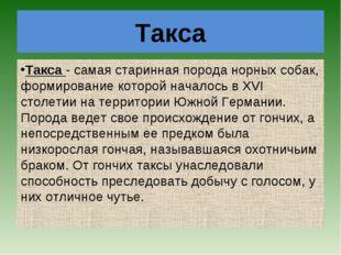 Такса Такса- самая старинная порода норных собак, формирование которой начал