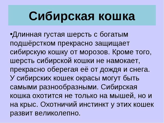 Сибирская кошка Длинная густая шерсть с богатым подшёрстком прекрасно защищае...