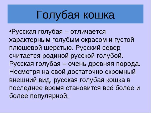 Голубая кошка Русская голубая – отличается характерным голубым окрасом и густ...