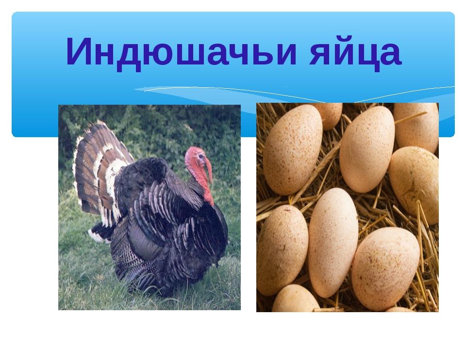 Индюшачьи яйца
