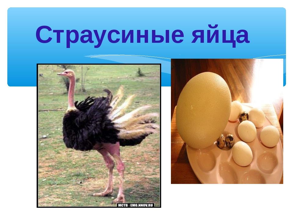 Страусиные яйца