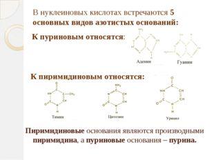 Пиримидиновые основания являются производными пиримидина, а пуриновые основан