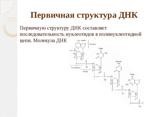 Первичную структуру ДНК составляет последовательность нуклеотидов в полинукле...