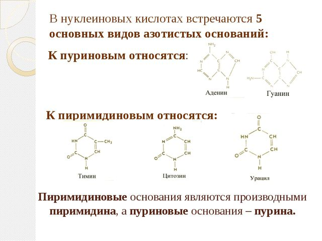 Пиримидиновые основания являются производными пиримидина, а пуриновые основан...