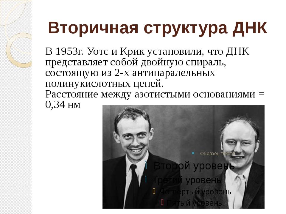 Вторичная структура ДНК В 1953г. Уотс и Крик установили, что ДНК представляет...