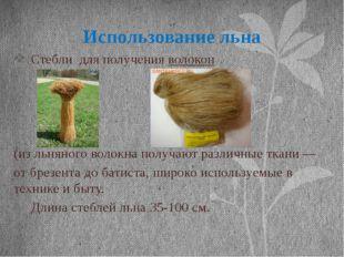Использование льна Стебли для получения волокон (из льняного волокна получают