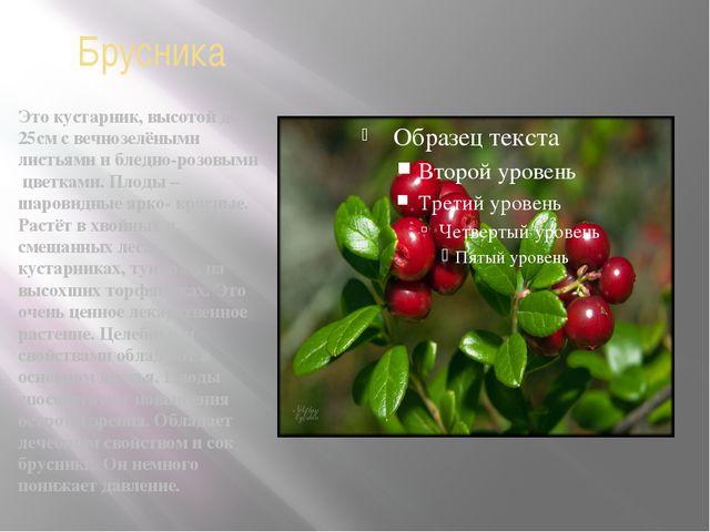 Брусника Это кустарник, высотой до 25см с вечнозелёными листьями и бледно-роз...
