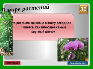 неправильный В мире растений Продолжить игру РАУНД II Как называется цветок,