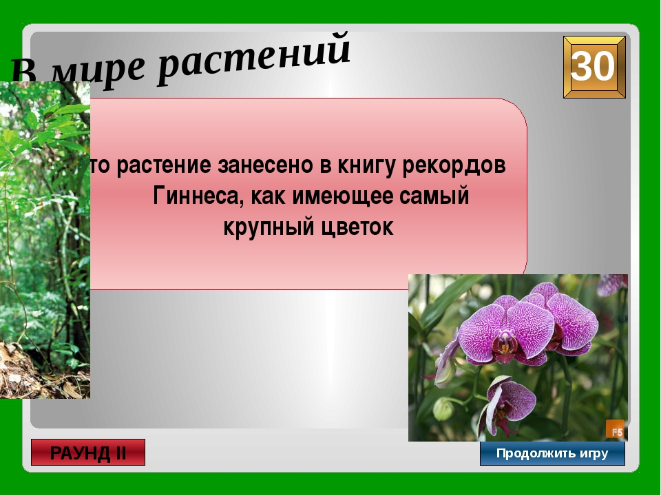 неправильный В мире растений Продолжить игру РАУНД II Как называется цветок,...