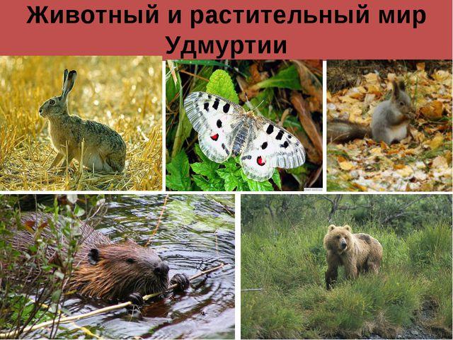 Животный и растительный мир Удмуртии