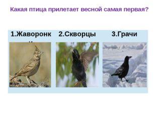 Какая птица прилетает весной самая первая? 1.Жаворонки 2.Скворцы 3.Грачи