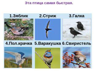 Эта птица самая быстрая. Зяблик 2.Стриж 3.Галка 4.Пол.крачка 5.Варакушка 6.С