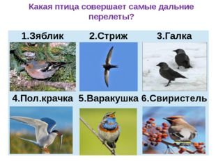 Какая птица совершает самые дальние перелеты? Зяблик 2.Стриж 3.Галка 4.Пол.к