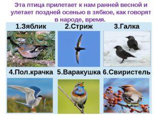 Эта птица прилетает к нам ранней весной и улетает поздней осенью в зябкое, к