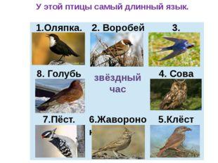 звёздный час У этой птицы самый длинный язык. 1.Оляпка. 2. Воробей 3. Ласточк