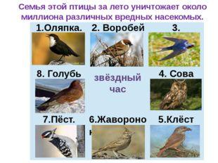 звёздный час Семья этой птицы за лето уничтожает около миллиона различных вре