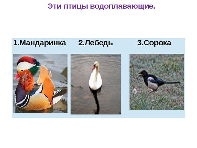 Эти птицы водоплавающие. 1.Мандаринка 2.Лебедь 3.Сорока