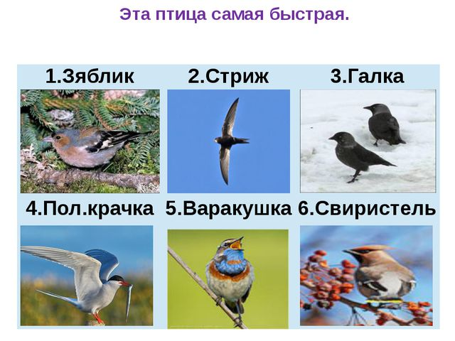 Эта птица самая быстрая. Зяблик 2.Стриж 3.Галка 4.Пол.крачка 5.Варакушка 6.С...