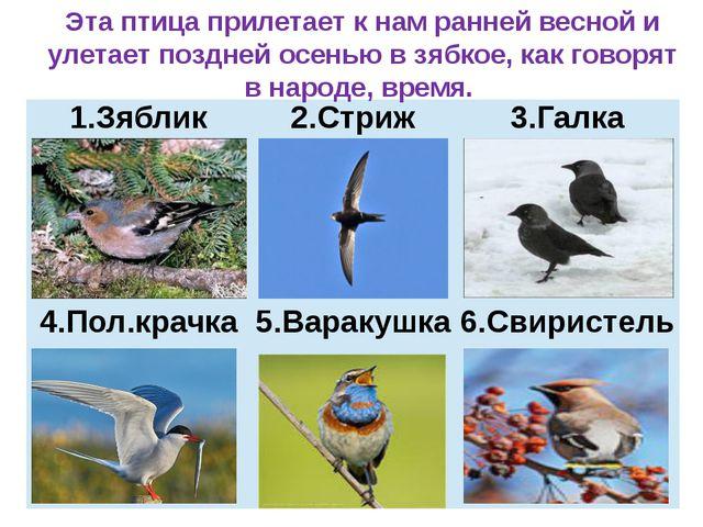 Эта птица прилетает к нам ранней весной и улетает поздней осенью в зябкое, к...