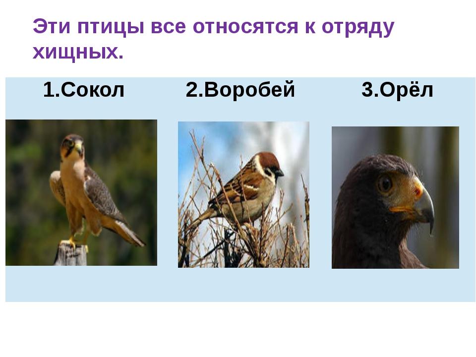 Эти птицы все относятся к отряду хищных. Сокол 2.Воробей 3.Орёл